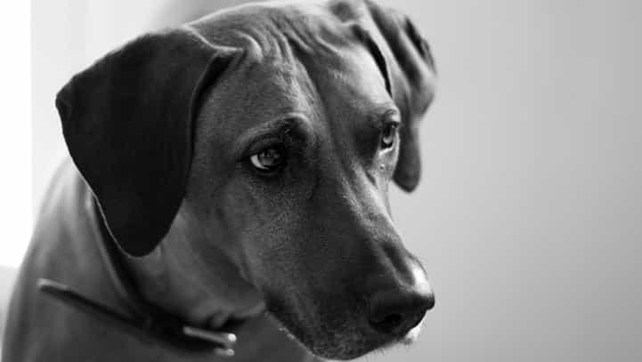 Tierhalterhaftpflichtversicherung: Haftung durch AGB eingeschränkt!
